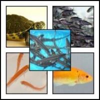 Alte specii de pesti speciale